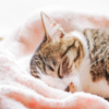 疲れが抜けない、それって睡眠が原因かも?質の良い睡眠で疲労回復。
